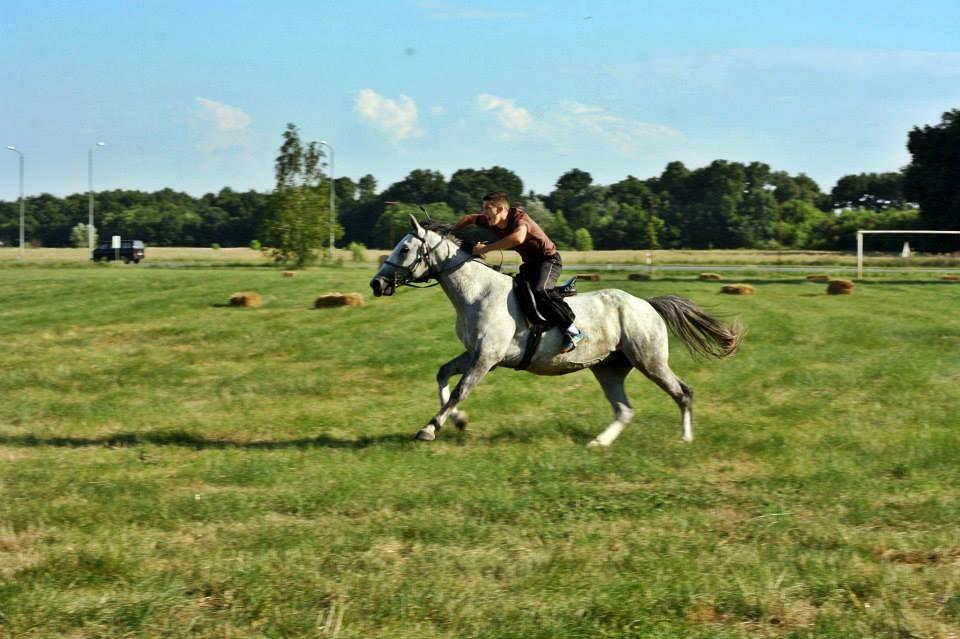 [51. LJETO VALPOVAČKO] Odlična vijest za sve ljubitelje konja i konjičkih sportova!
